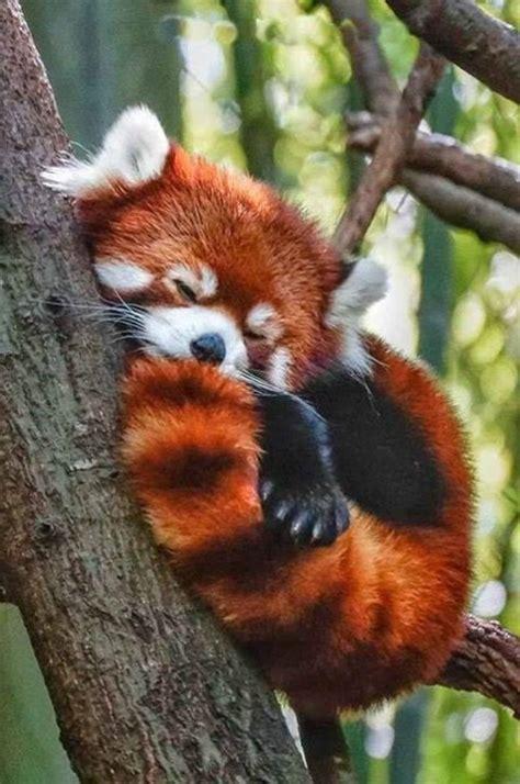 imagenes de animales uñas caritas tiernas free dibujos de caritas tiernas imagui