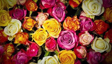 il significato dei fiori ditelo con i fiori il significato dei fiori regalati