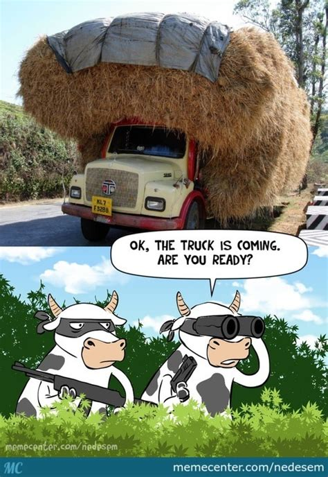 Hay Meme - hay memes best collection of funny hay pictures