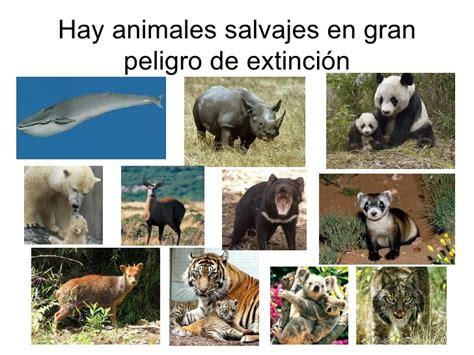 imagenes de animales xilofagos los animales salvajes