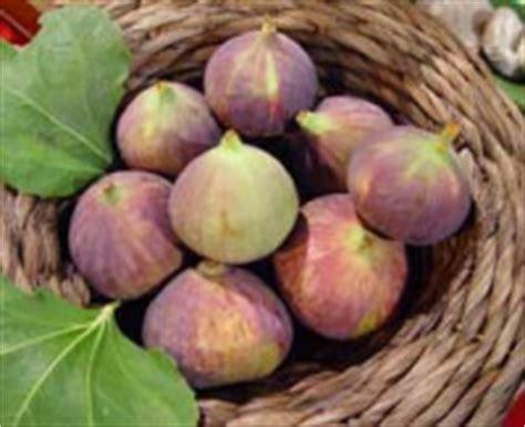 frutta ricca di ferro alimenti vegetali con pi 249 quantit 224