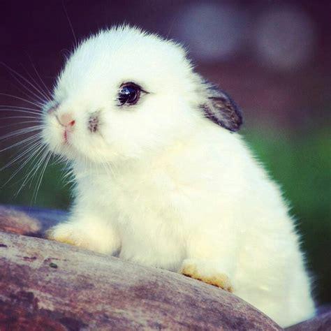 imagenes de animales lindos 17 mejores ideas sobre conejitos en pinterest animales