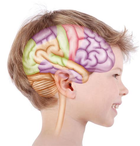 Brain Child brain test can spot future criminals by the age of 3 uk