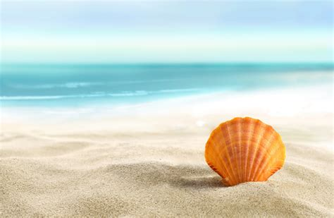 on the beach seashells on the beach wallpaper wallpapersafari