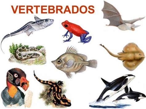 imagenes de animales vertebrados e invertebrados animais vertebrados e invertebrados classifica 231 227 o e