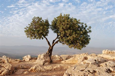 friedman lexus and the olive tree the lexus and the olive tree home vs the world cututu