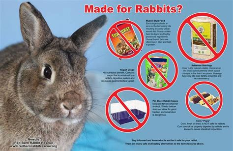 8 Tips On Caring For Pet Rabbits by 845 Best Images About Animal Care Toys Etc On