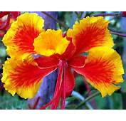 Flower Homes Flowers Of World Countries  M