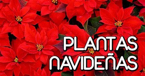 como decorar un jardin de navidad decoracion jardin navidad facilisimo