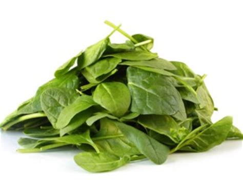 can dogs spinach can i give my spinach great tips for giving dogs spinach