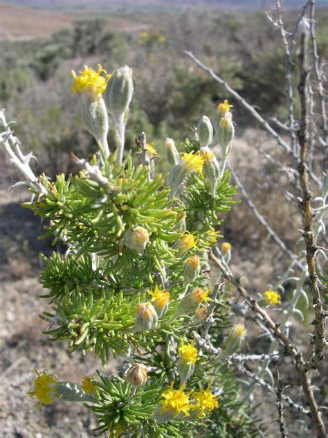 picturespool desert plants flowers trees