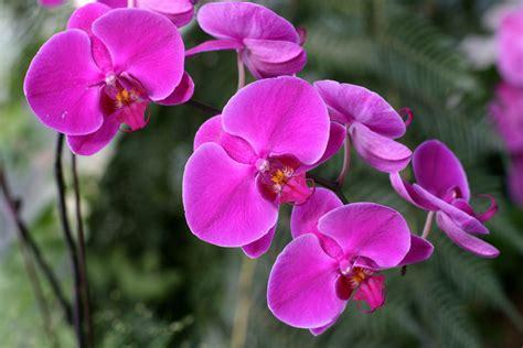 Pflanzen Im Garten 2567 orchideen umtopfen au 223 erhalb der bl 252 tezeit
