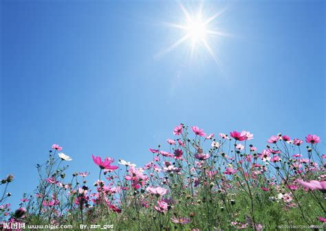 beneath the summer sun an every amish season novel books 罂粟花的天空摄影图 花草 生物世界 摄影图库 昵图网nipic