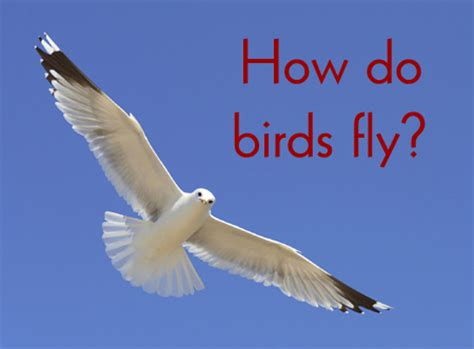 how do birds fly wonderfulinfo