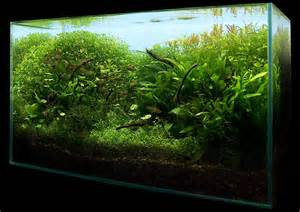 nano aquascape mystic 15l aquascaping world forum