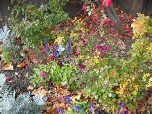 cold temperature plants best plants for a fall garden