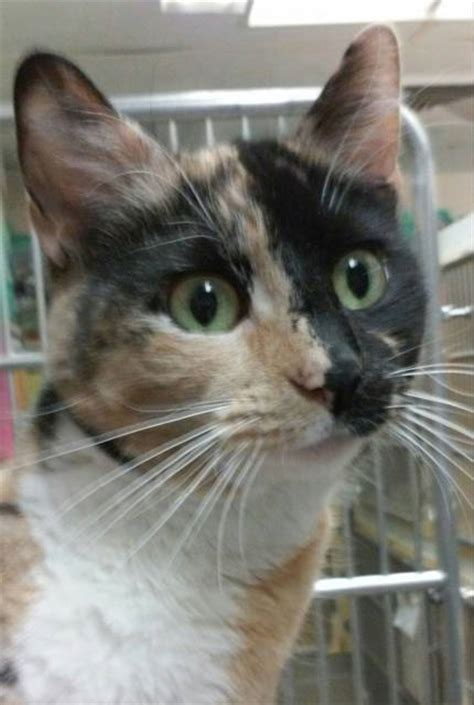 abington journal griffin pond animal shelter pet   week blanche seeks  home