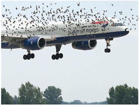 tp 8240 airport wildlife management bulletin no 38 transport canada