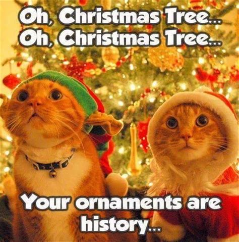 Christmas Animal Meme - best 25 funny cat pictures ideas on pinterest laughing