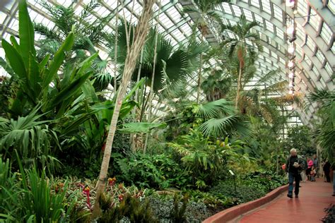 tropical plants chicago garfield park conservatory the green lung of chicago