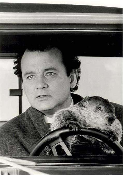 bill murray groundhog day imdb groundhog day bill murray