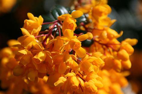 pretty orange pretty orange things flickr photo sharing