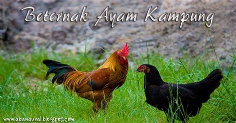 membuat ayam nafsu makan tips menambah nafsu makan pada ayam kampung berternak