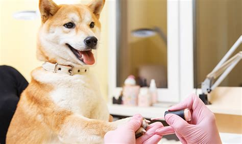 puppy tubs peachtree city ga how to choose the right doggie day spa for your pooch
