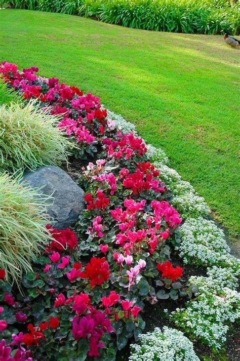 flower bed border ideas alyssum begonia  ornamental