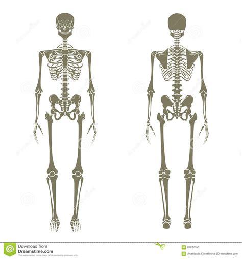skeletal diagram human skeletal system labeled front and back diagram