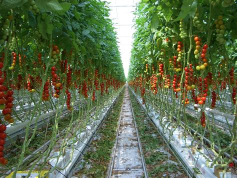 sustainable urban agriculture  nigeria changemakers