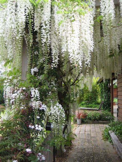 draping plants 25 best ideas about hanging gardens on pinterest horta vertical pvc gutters and wall gardens