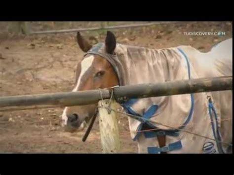 caballos cogiendo youtube mujer pony youtube