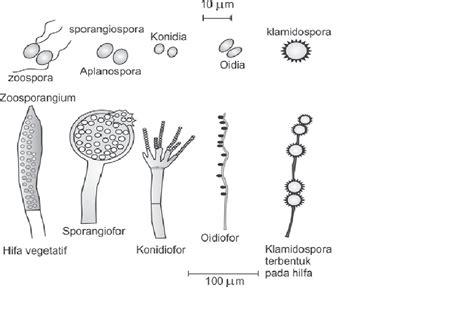 Rautan Bentuk Jamur 2 Lubang reproduksi pada jamur 171 alkafyuone
