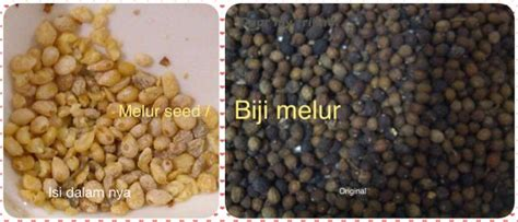Black Chiaseed 500 Gr melur seed biji melur superfood indonesia