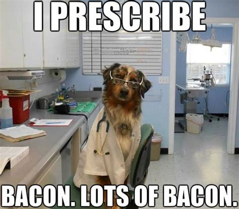 Dog Vet Meme - 60 best vet humor images on pinterest
