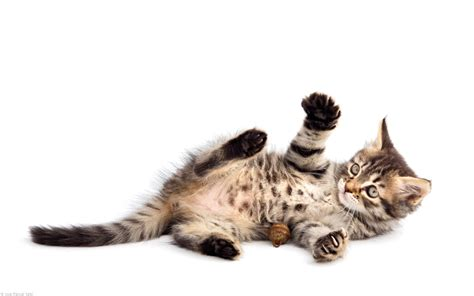 who plays cat pics of kittens and cats pictures of animals 2016