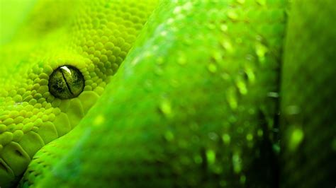 wallpaper green snake snakes hd wallpapers wallpaper202