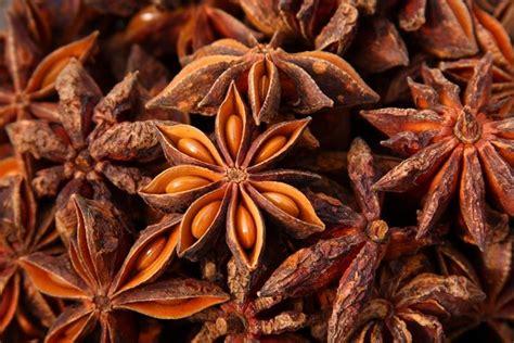 anice stellato in cucina anice pimpinella anisum pimpinella anisum aromatiche
