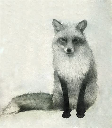 red fox drawning  foxes fox