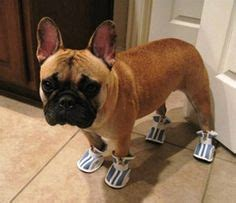 dogs wearing shoes 1000 images about dogs wearing shoes on real puppys and for dogs