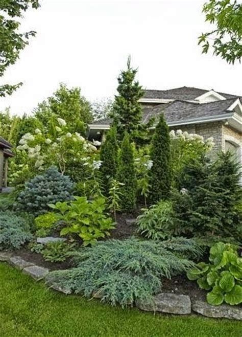 25 best ideas about evergreen best 25 evergreen landscape ideas on privacy