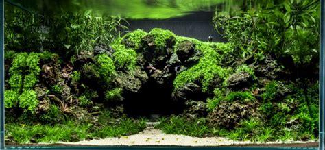 mountain aquascape planted aquarium architect custom fish tanks sydney