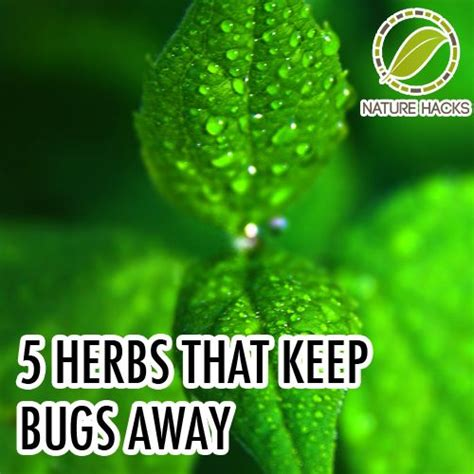 17 best ideas about keep bugs away on