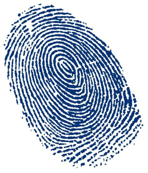 biometric art 10 interesting fingerprint facts my interesting facts