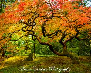 japanese gardens portland oregon s creative