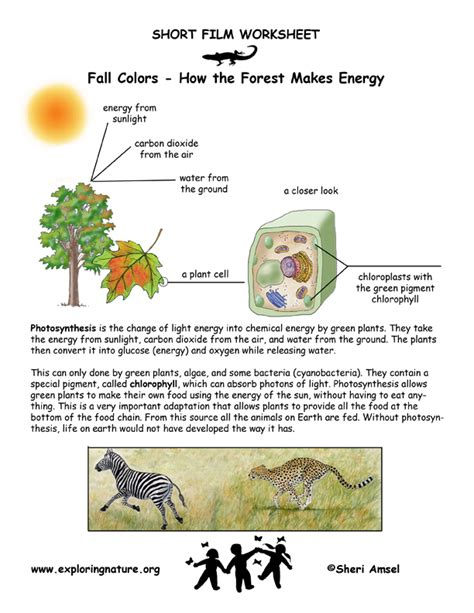 Photosynthesis Worksheet by Lets Solve Eds Past Papers Page 9 Css Forums