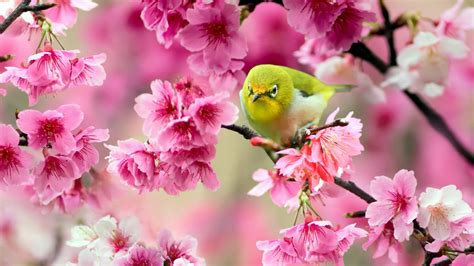 green wallpaper with pink flowers download pink flower wallpaper green bird 2018 cute