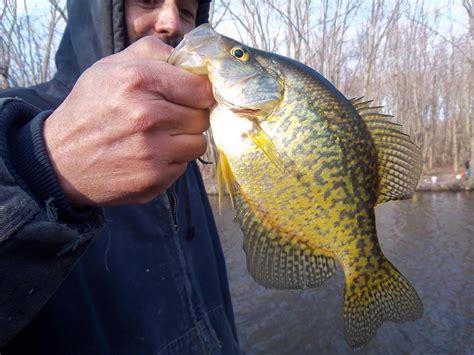 fishing hunting  oswego county ny crappie fishing