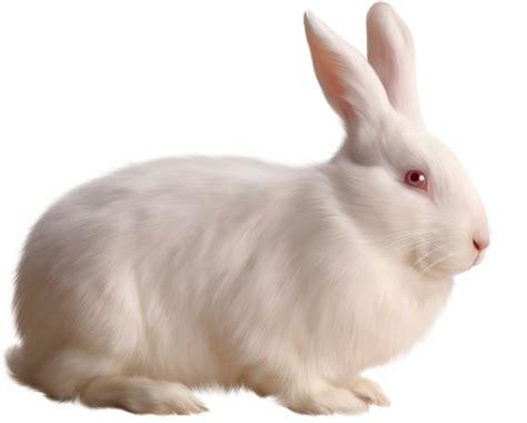 rabbit images rabbit png images free png rabbit pictures
